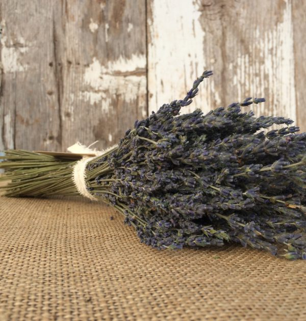 Lavender bunch from dried certified organic lavender.